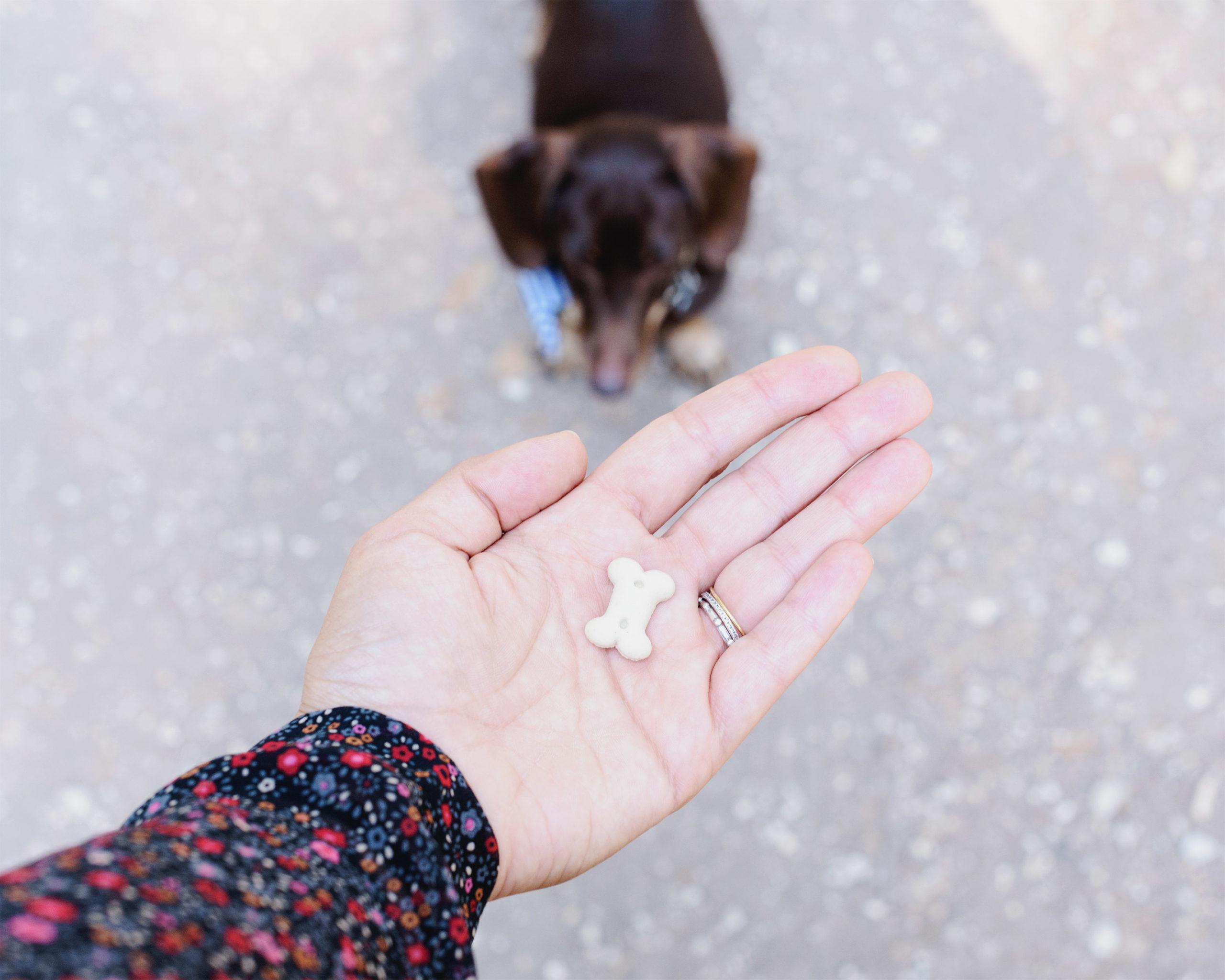 Fotografia: il segreto del rinforzo positivo nell'educazione del cane